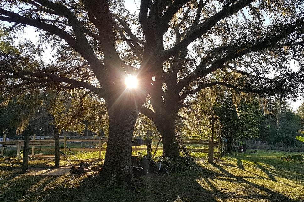 Tree In Morning Light_Crop.jpg
