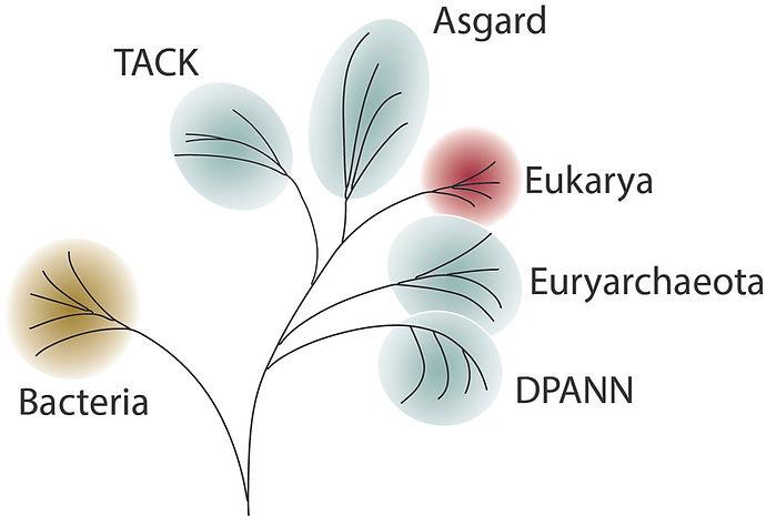 Archaea Tree.jpg