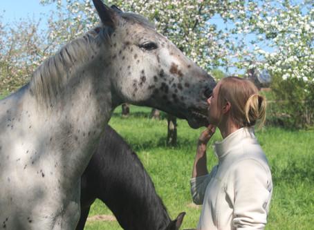 """""""Das Wesentliche""""- Auszug aus einem Pferdegespräch"""