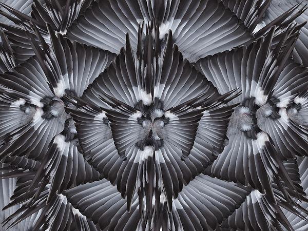 BirdwingsBW.jpg