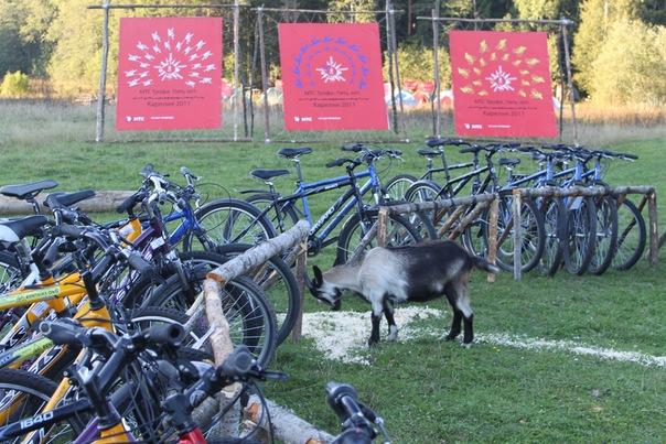 прокат велосипедов петербург, гд.jpg