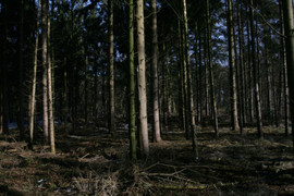 bos op houten paneel 28x40,5cm.