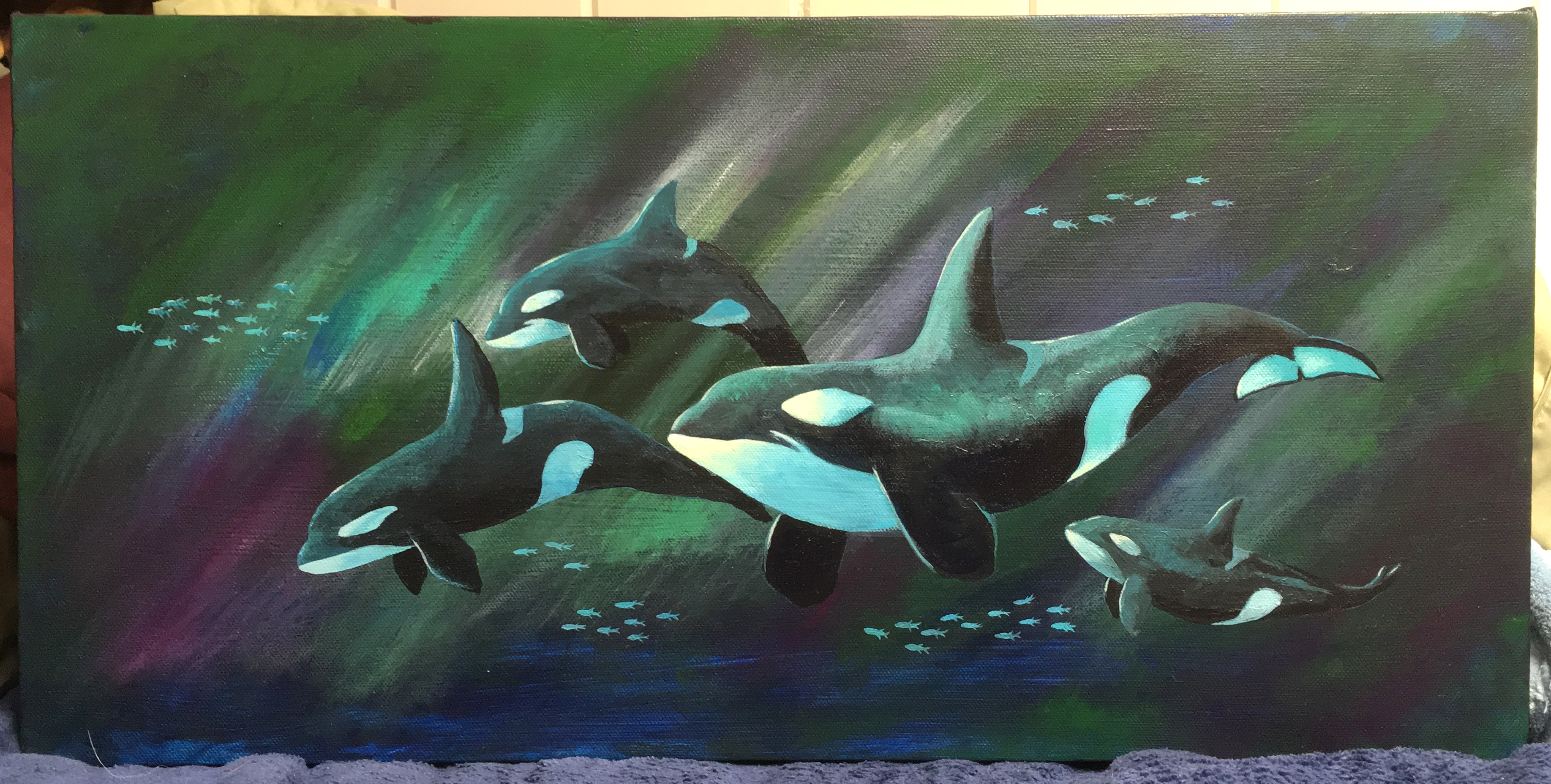 Northern Lights Orca 3