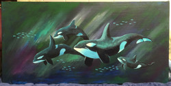Northern Lights Orca 3