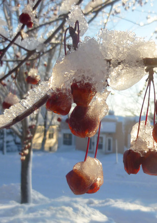 icy apples_2014_small.jpg