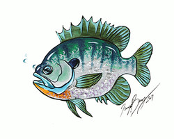 Small Sunfish reduced