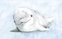 Beluga Seal Pup