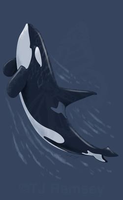 Orca Free