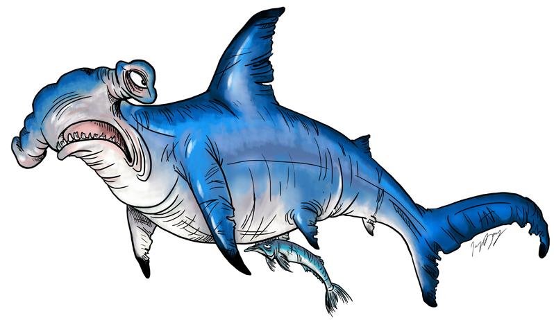Hammered Hammerhead Shark