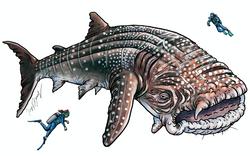 Woebegone Whale Shark