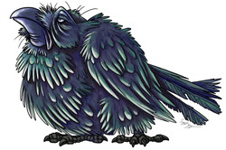 Droopy Raven