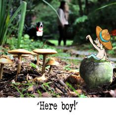 Here boy!
