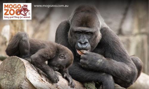 Mogo Zoo Eurobodalla South Coast NSW