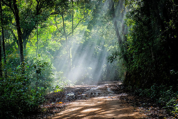 rain-forest-with-dirt-road_2379-392.jpg