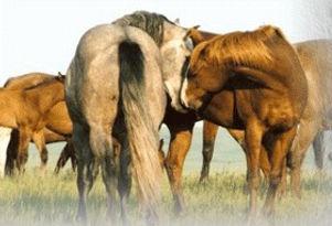 stallions2_edited.jpg