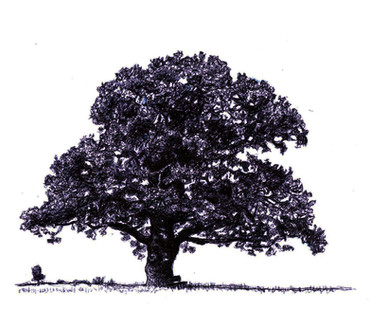 """The Oak"""