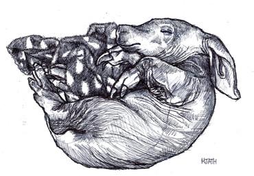 """""""Sleepy Aardvark"""""""