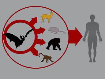 Waspada Ebola Virus Disease