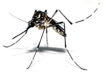 Waspadai Infeksi Virus ZIKA