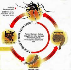 Pencegahan Demam Berdarah