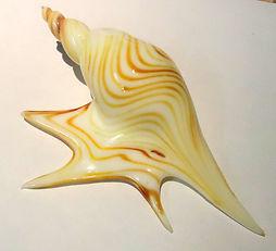 Pelican Foot Shell 1.JPG