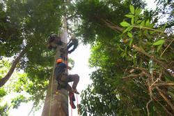 Making Ascents