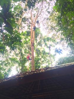 Climbing highter
