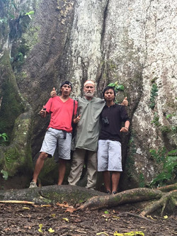Huge Cieba Tree