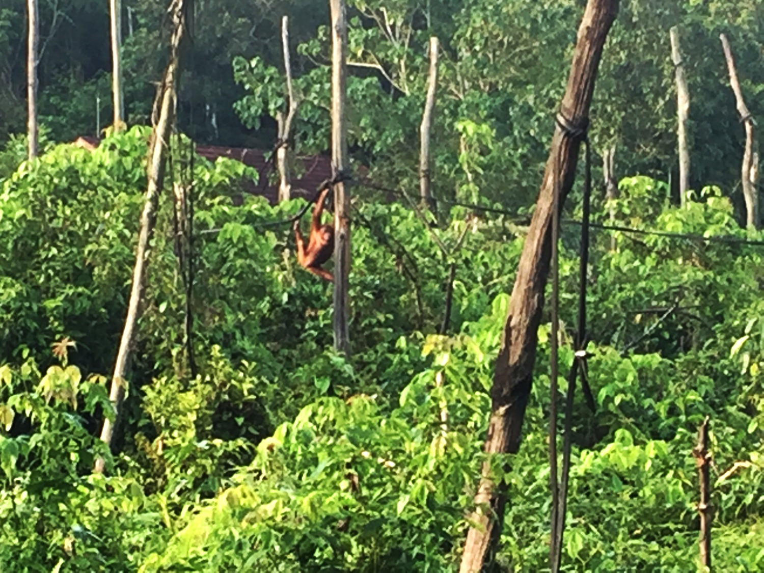 Climbing a new Rainforest