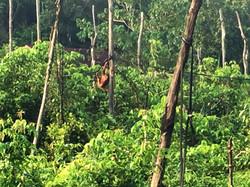 Climbing a new Rainforest