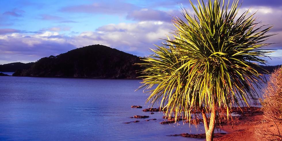 Leg 1 Brisbane; Opua, Auckland, NZ