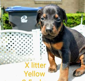 Yellow 3.5 weeks