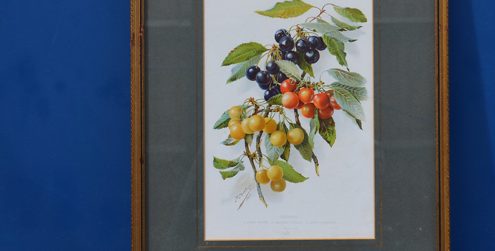Cherrie Fruit Framed Painting 1900's