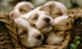 Puppy Photography 1080p Wallpapers 23.jp