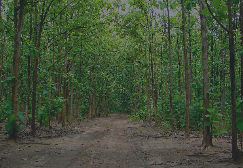 teak_trees.png
