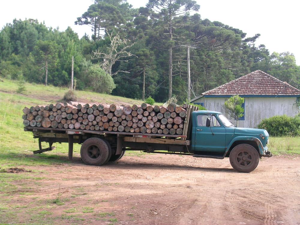 285 - Caminhao com Pinus FLONA SFP.JPG