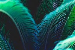 sago palm fronds_edited.jpg