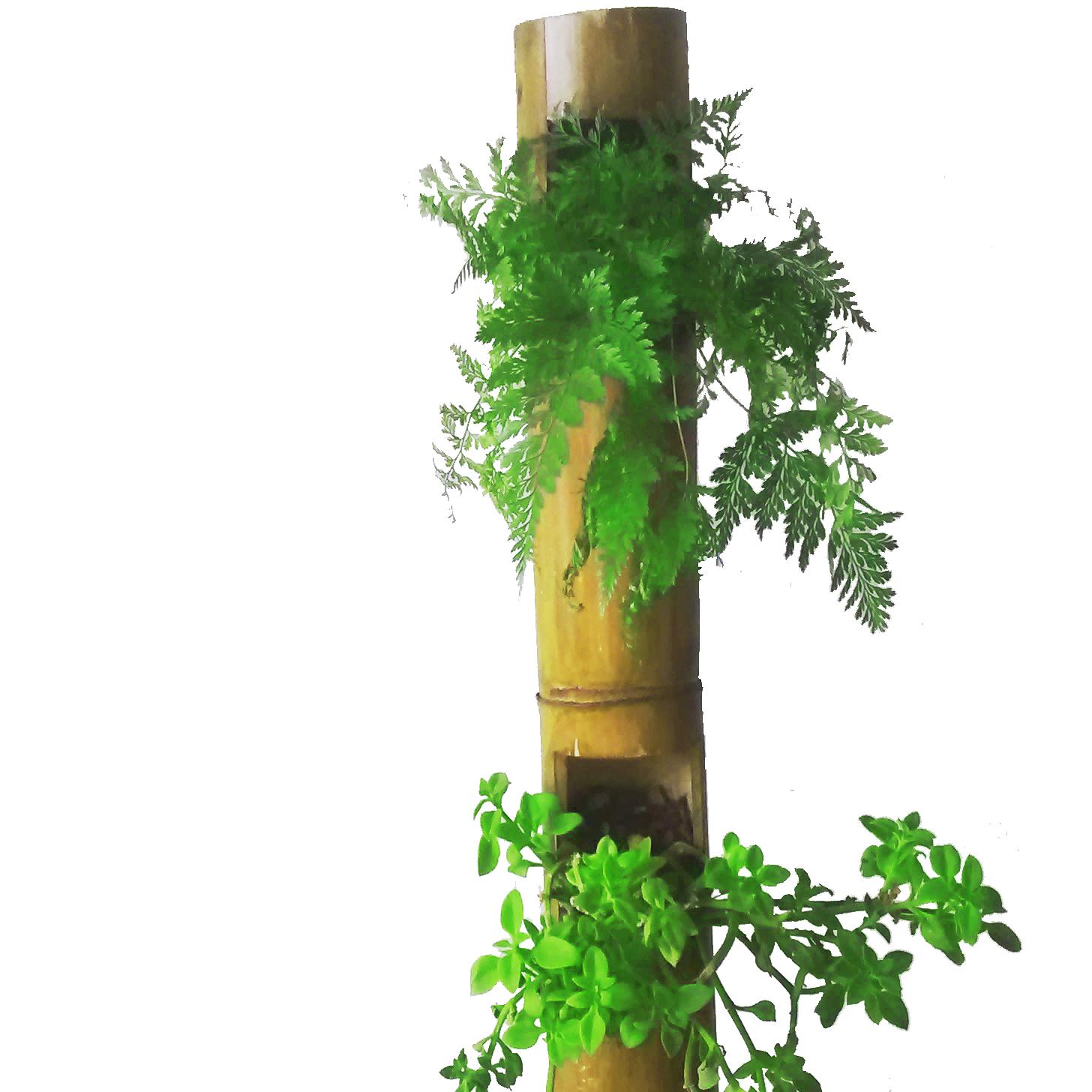 palo de bambú