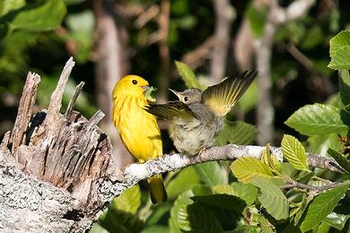 Mom Feeding Baby Bird.jpg