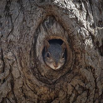 Marc squirrel in tree.jpg