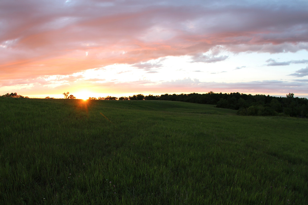 An Iowa field at sunset.