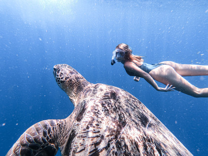Swimming with turtles in Bali