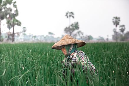 Rice field tour in Ubud - Bali
