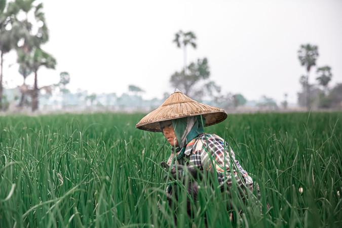 Visite des rizières à Ubud - Bali