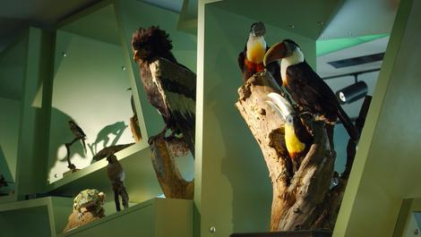 Musée national d'histoire naturelle, Luxembourg-Grund