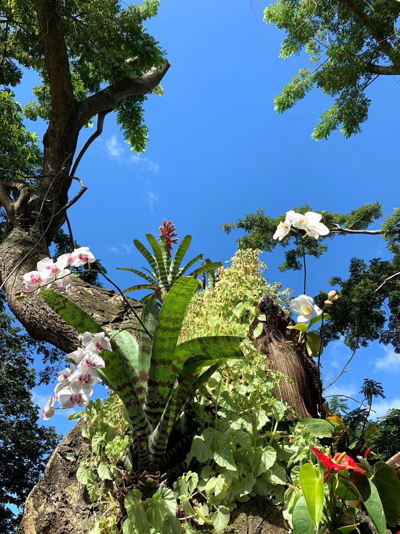 fleur arbre_edited.jpg