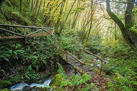 Sendero con puente ruta del agua. Taramu