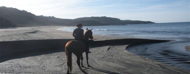 Paseo de caballos por la playa
