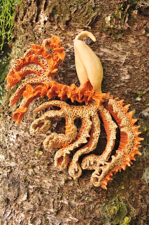 Zoophyta fasciculata, 2010