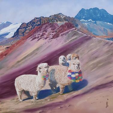 Alpagas sur Vinicunca (Perou)